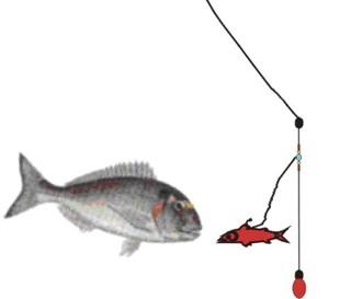 hacer aparejos de pesca: